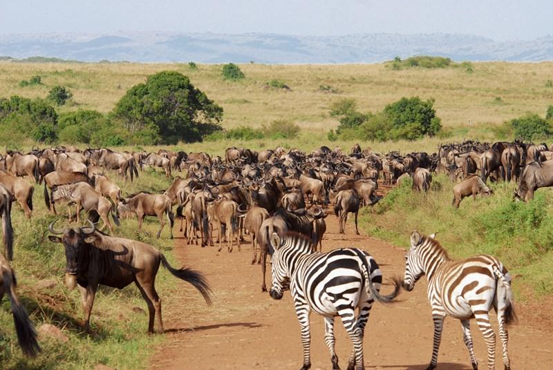 Il faut protéger les animaux sauvages