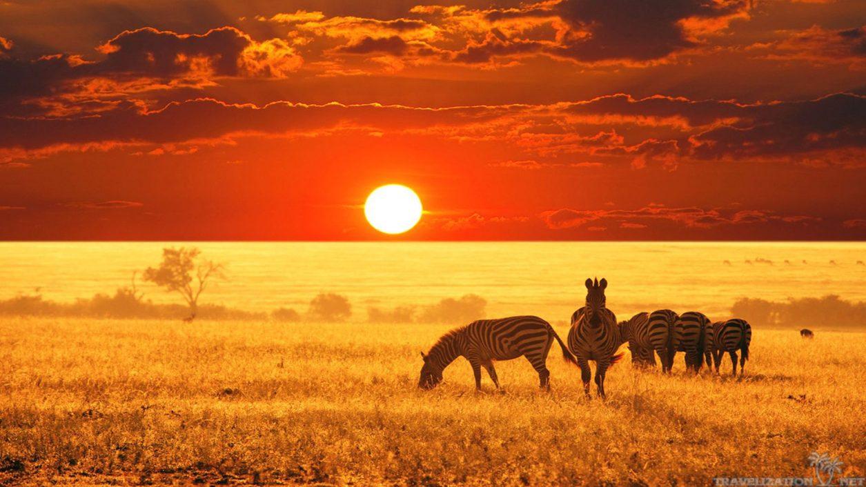 Je suis allée de safari en safari avec safarivo.com