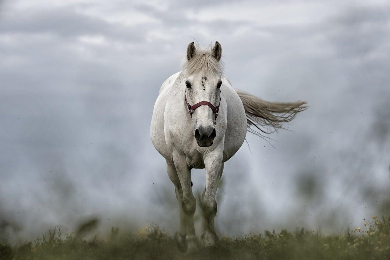 sauver un cheval de l'abattoir